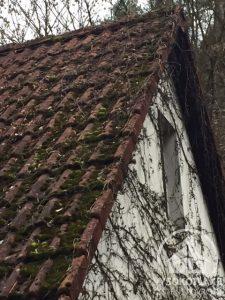 střecha_porostlá_mechy